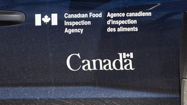 Fergus, Ont., woman fined $25K for illegally importing hundreds of doses of bovine semen