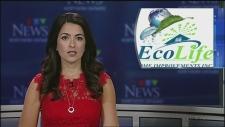 EcoLife Home Improvements in Sudbury