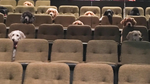 Service dogs at the Stratford Festival