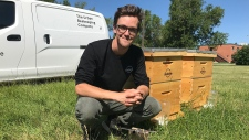 Calgary, bees, hives, Liam Cobbe, Currie
