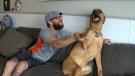 Dog owner warns after near-fatal algae incident