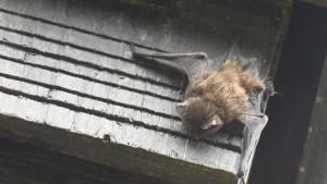 Island vet issues warning after rabid bat found
