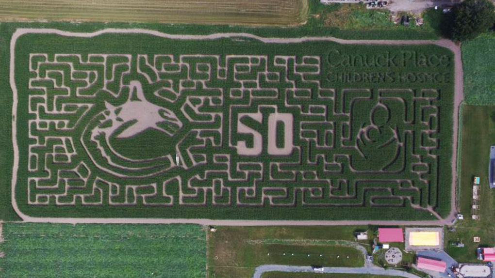 This B.C. corn maze was designed to celebrate 50 years of the Vancouver Canucks