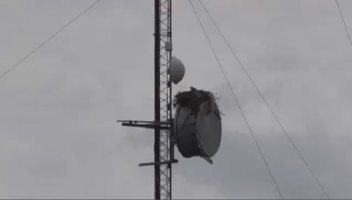 An osprey nest on one of the radio system's six towers.