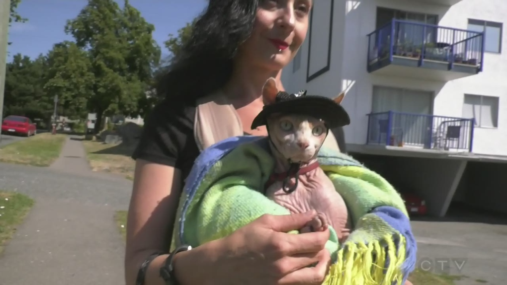 Hairless cat becomes furless fashionisto with outfit for every occasion