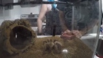 Abandoned tarantula's story goes viral