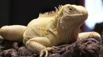 Reptile show in Sault Ste. Marie
