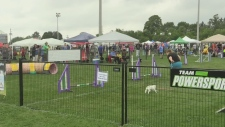 Canada's largest agility competition