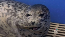 Leave seal pups alone: MMRC