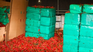 This Thursday, Aug 15, 2019, photo released by the U.S. Customs and Border Protection shows marijuana mixed in with a shipment of jalapeno peppers seized by CBP officers in San Diego's Otay Mesa, Calif. (U.S. Customs and Border Protection via AP)