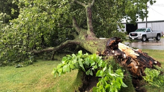 Trees down Kerwood, Ontario
