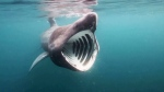CTV National News: Elusive basking shark