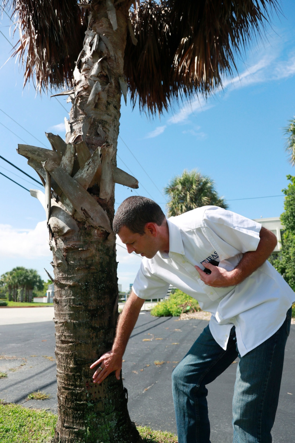 In this Wednesday, July 31, 2019, photo, Brian Bahder, assistant professor of entomology at the University of Florida, points to a cabbage palm tree that died from a lethal bronzing disease in Davie, Fla. (AP Photo/Wilfredo Lee)