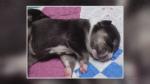 Litter of puppies found in Kitchener park