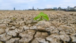 The river bed of the Rhine is dried on August 8, 2018 in Duesseldorf, Germany during an exceptionally long heat wave. (AFP)