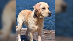 An Ontario family whose dog went missing in cottage country last week recently received a note that read: 'I have your dog, so stop looking for him.' (Jordin Legate/Facebook)