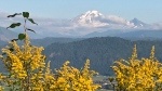 A photo shown on CTV Morning Live Tuesday, Aug. 20 shows Mount Baker as seen by Sharon Schulz from Eagle Mountain in Abbotsford.