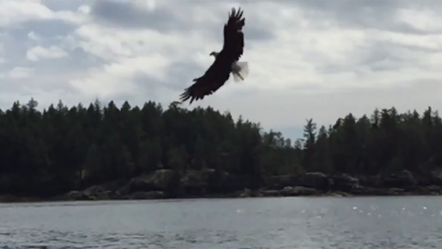 f7cec5980 Watch a bald eagle catch a fish in this slow-motion video from a ...