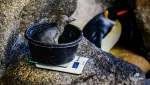 The king penguin chick weighed 440 grams on August 20, 2019 (Calgary Zoo)