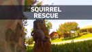 Squirrel rescue