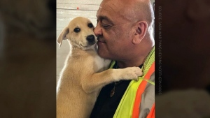 A dog rescue organization is calling out for volunteers flying directly from Winnipeg to Ottawa to take a furry friend in need of a home along for the ride.