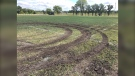 A vehicle tore up the newly upgraded field. (Source: Glenn Pismenny/CTV News)