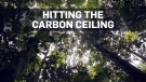 Amazon has limits on capturing carbon dioxide