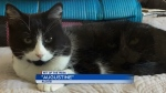Pet of the Week: Augustine