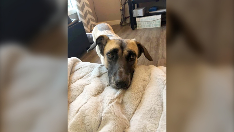Lucy arrived in Canada in March from Thailand and had been recently adopted by a family when she went missing. (Emily Tetrault)
