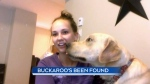 Stolen dog 'Buckaroo' recovered by owner