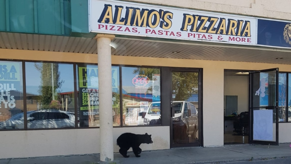 A bear went into a Slave Lake, Alta., barbershop on Wednesday, Aug. 21, 2019.