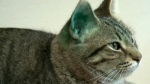 79 cats seized from Regina home