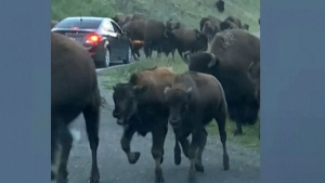 Trending: How not to avoid a stampede
