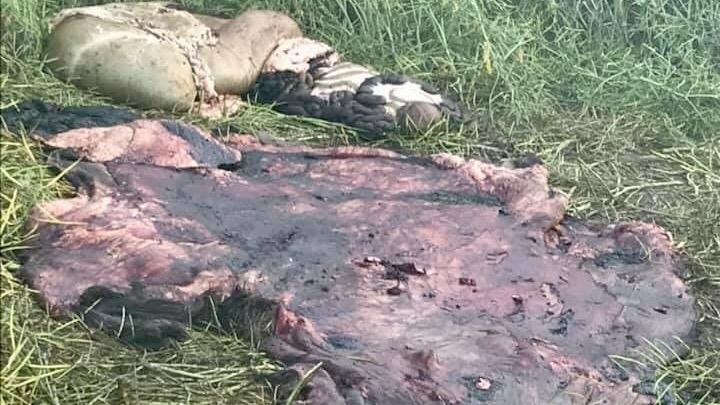 'Disregard for our livelihood': Farmer concerned after hunter drives over canola field for moose hunt