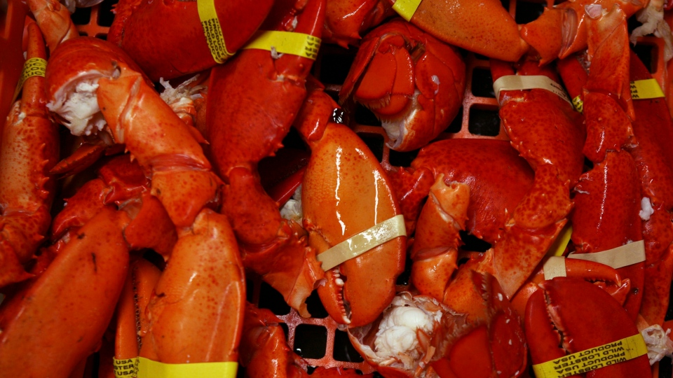 In this October 2008 file photo, cooked lobster claws and tails are seen at a lobster dealer in Portland, Maine.  (AP Photo/Pat Wellenbach, File)