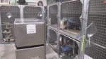 More than reno needed at St Thomas Animal Shelter?