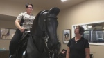 Horse simulator helps riders stay in form