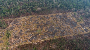 A lush forest sits next to a field of charred trees destroyed by wildfires near Porto Velho, Brazil, Friday, Aug. 23, 2019. Under increasing international pressure to contain fires sweeping parts of the Amazon, Brazilian President Jair Bolsonaro on Friday authorized use of the military to battle the massive blazes. (AP Photo/Victor R. Caivano)