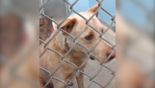 Punky – a four-year-old American cattle dog – was scheduled to be put down Friday, but an eleventh-hour decision has given his owner a rare opportunity to apply for a leave to appeal.