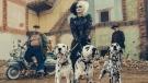 Disney has revealed a sneak peek of Emma Stone as Cruella de Vil in a punk-rock re-imagination of the classic movie villain. (Walt Disney Studios/Twitter)