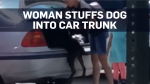 florida woman dog car trunk