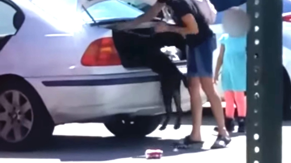 A Florida woman was charged with animal abuse after a video showed her allegedly stuffing her dog into the trunk of a car and driving off, The Brevard County Sheriff's Office said. (Brevard County Sheriff's Office/Facebook)