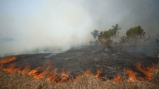 Fire consumes a field along the BR 070 highway near Cuiaba, Mato Grosso state, Brazil, Sunday, Aug. 25, 2019. Experts say most of the fires are set by farmers or ranchers clearing existing farmland, but the same monitoring agency has reported a sharp increase in deforestation this year as well. (AP Photo/Andre Penner)