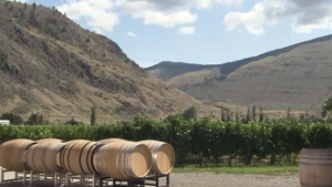 Green approach in BC wineries