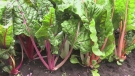 Three community gardens coming to Barrie this summer. (FILE)