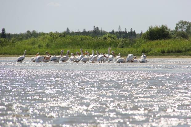 Husavik Coastal Wetlands