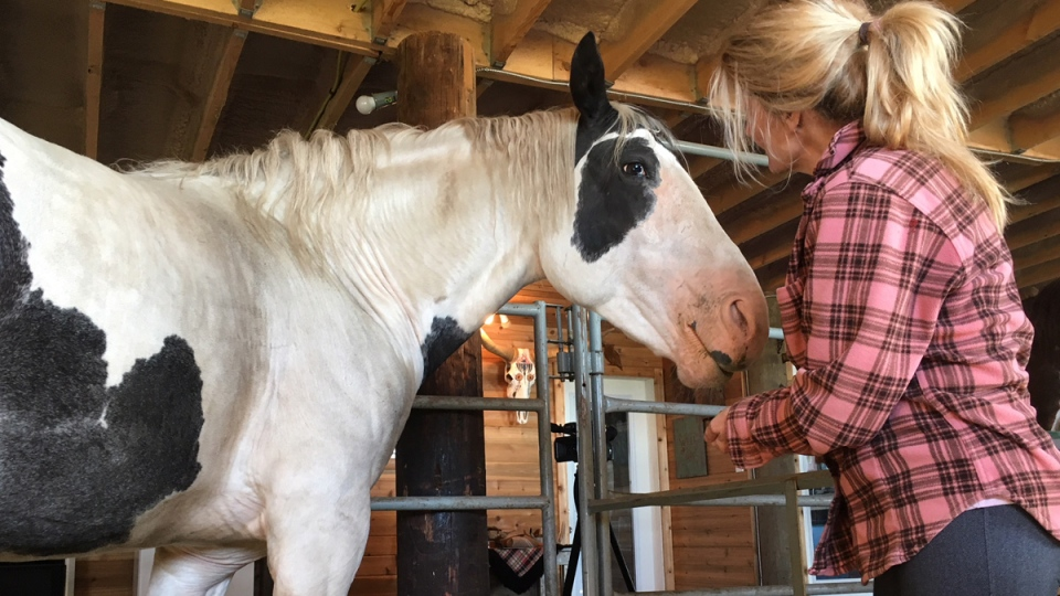 Valour is helping others heal at a equine therapy facility in Morinville, Alta., just over a year after he nearly died.