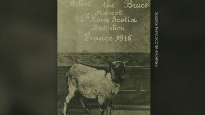 N.S. museum curator working to unearth more history on goat mascot from First World War