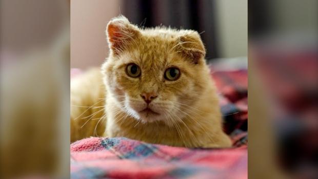 Buddy senior cat