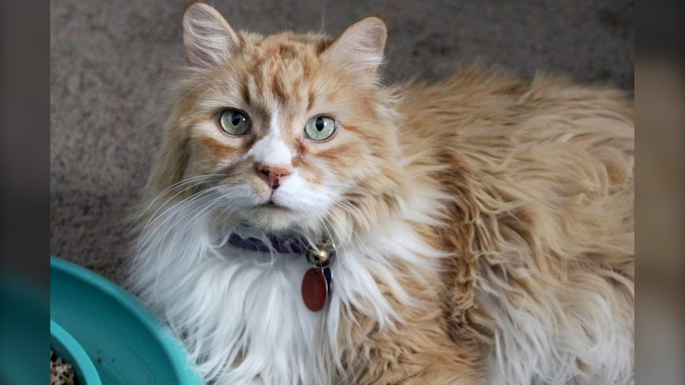 Sparky is a 13-year-old male who has been at ARTS Senior Animal Rescue for about a month. (ARTS Senior Animal Rescue)